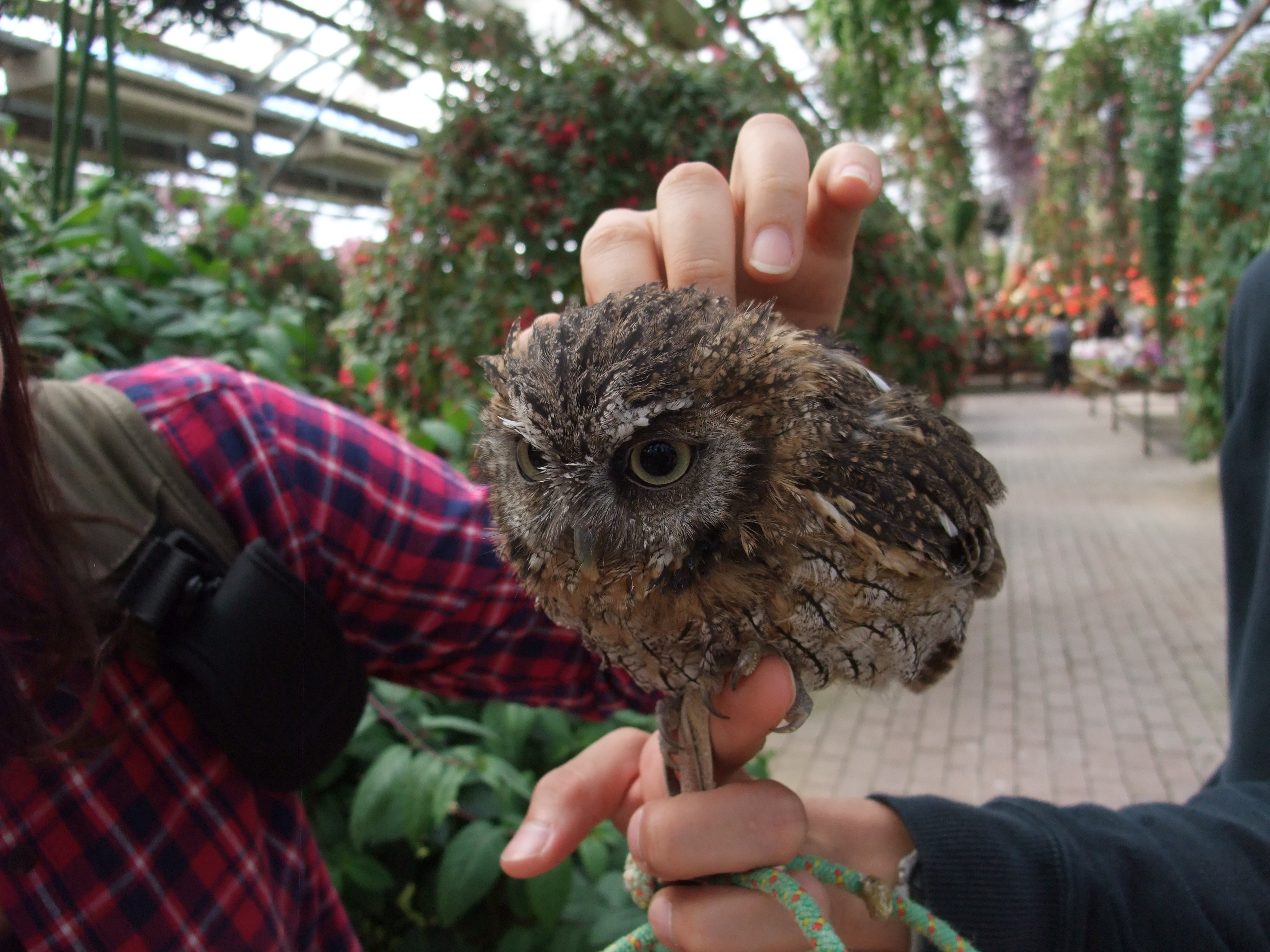富士花鳥園 フクロウ 触れ合える エミュー 鳥 エサやり